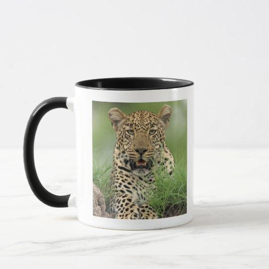 Leopard, Panthera pardus, Sabi Sabi Game Mug