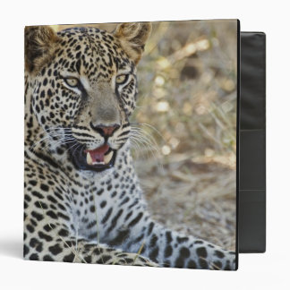 Leopard, Panthera pardus, Samburu Game 3 Ring Binder