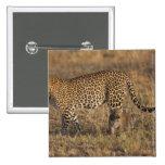 Leopard Panthera pardus) with cub, Masai Mara Buttons