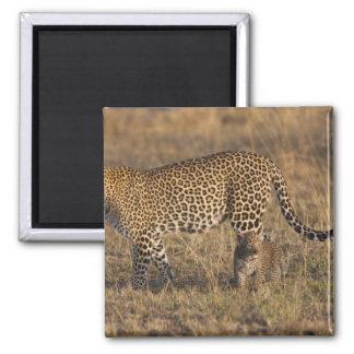 Leopard Panthera pardus) with cub, Masai Mara Refrigerator Magnet