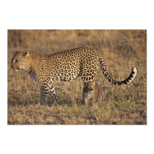 Leopard Panthera pardus) with cub, Masai Mara Photo Art