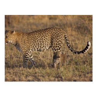 Leopard Panthera pardus) with cub, Masai Mara Postcard