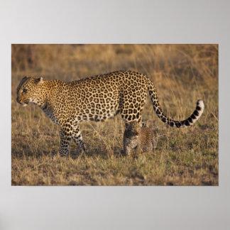 Leopard Panthera pardus) with cub, Masai Mara Poster