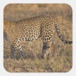 Leopard Panthera pardus) with cub, Masai Mara Square Sticker