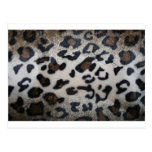 Leopard pattern, natural color fake fur closeup post card