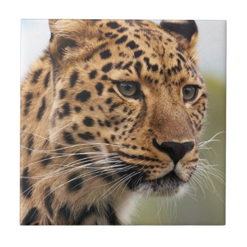 Leopard Photo Ceramic Tiles