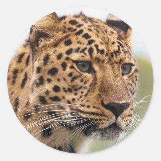 Leopard Photo Classic Round Sticker