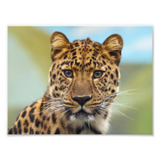 Leopard Photo Print