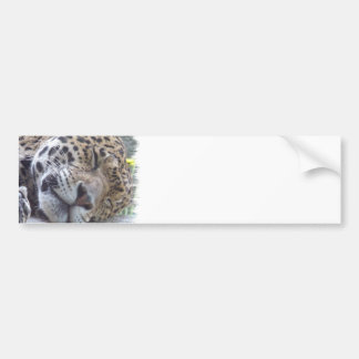 Leopard Picture Bumper Sticker