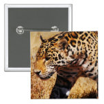 Leopard Pinback Buttons