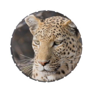 Leopard portrait jelly belly candy tin