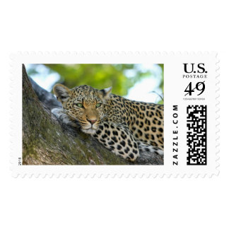 Leopard Stamps