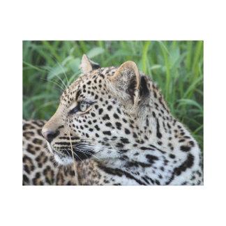 Leopard Profile Stretched Canvas Prints