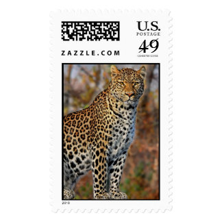 Leopard Profile Postage Stamps