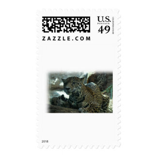 LEOPARD - PROTECTIVE MOTHER AND KITTEN POSTAGE STAMPS
