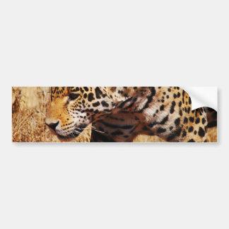 Leopard Prowling Bumper Sticker