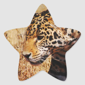 Leopard Prowling Star Sticker