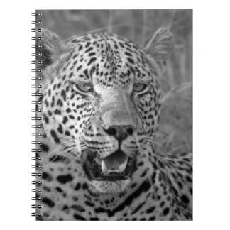 leopard relaxing notebook
