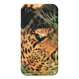 Leopard resting in grass iPhone 4/4S cases