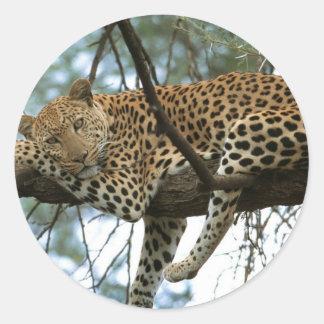Leopard Resting in Tree Classic Round Sticker