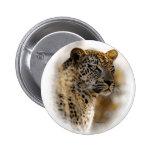 Leopard safari buttons & badges