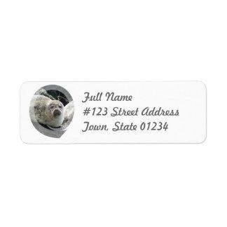 Leopard Seal Return Address Mailing Label Return Address Label