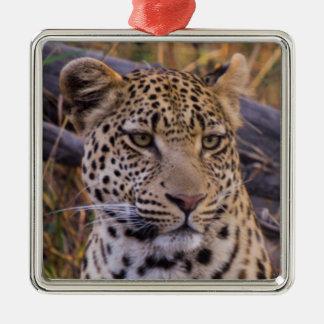 Leopard sitting, Botswana, Africa Metal Ornament