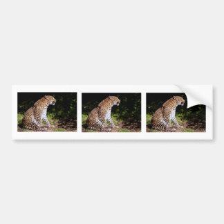 Leopard sitting bumper sticker