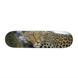 Leopard Skate Deck