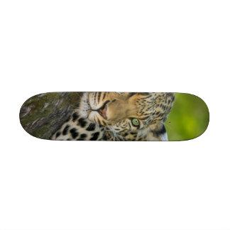 Leopard Skate Board Decks