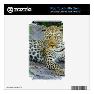 Leopard Skins For iPod Touch 4G