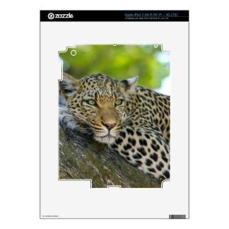 Leopard iPad 3 Decals
