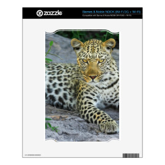 Leopard NOOK Skin