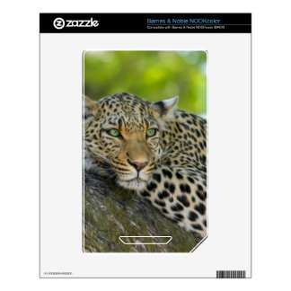 Leopard Decal For The NOOK Color