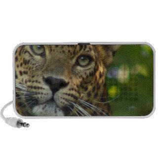 Leopard Speakers