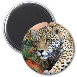Leopard Stalking Macro Magnet