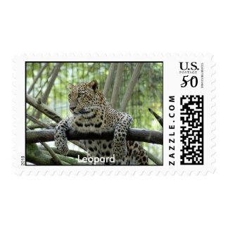 Leopard Stamp