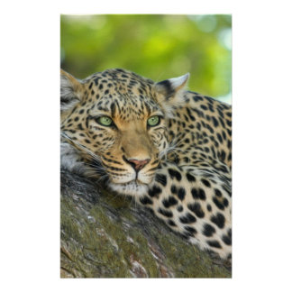 Leopard Customized Stationery
