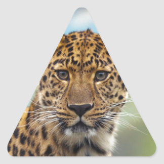 Leopard Triangle Sticker