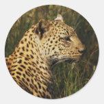 Leopard wild animal safari stickers