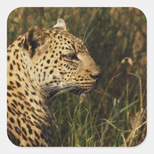 Leopard wild animal safari stickers (big 5 cats)
