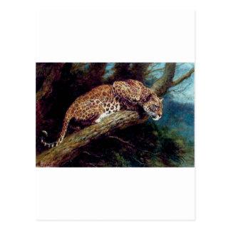 leopard wild cat animal antique painting postcard
