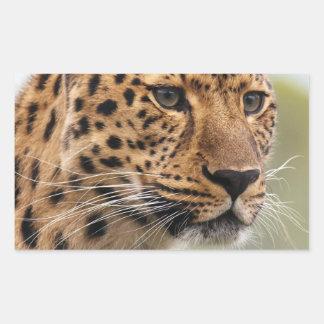 Leopard Wild Cats Rectangular Sticker