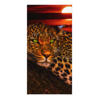 Leopard with Sunset Card