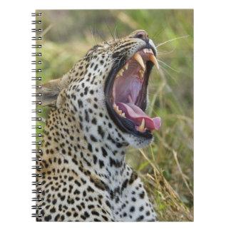 Leopard yawning, Greater Kruger National Park, 2 Spiral Notebook