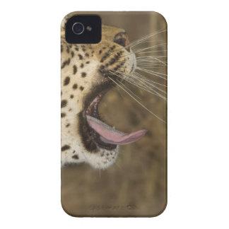 Leopard yawning, Greater Kruger National Park, iPhone 4 Case-Mate Cases