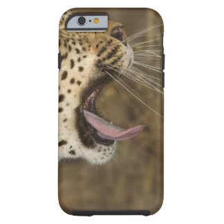 Leopard yawning, Greater Kruger National Park, Tough iPhone 6 Case