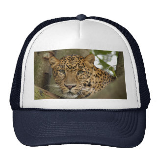 LeopardCheetaro002 Trucker Hat