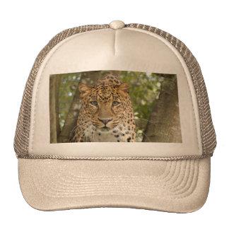 LeopardCheetaro004 Trucker Hat