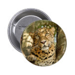 LeopardCheetaro013 2 Inch Round Button